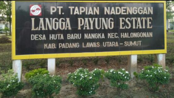 PT. Tapian Nadenggan. Foto: Rakyatsumut.com/ Rifai Dalimunthe