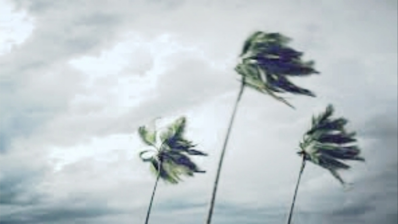 Ilustrasi angin kencang. Foto: Istimewa