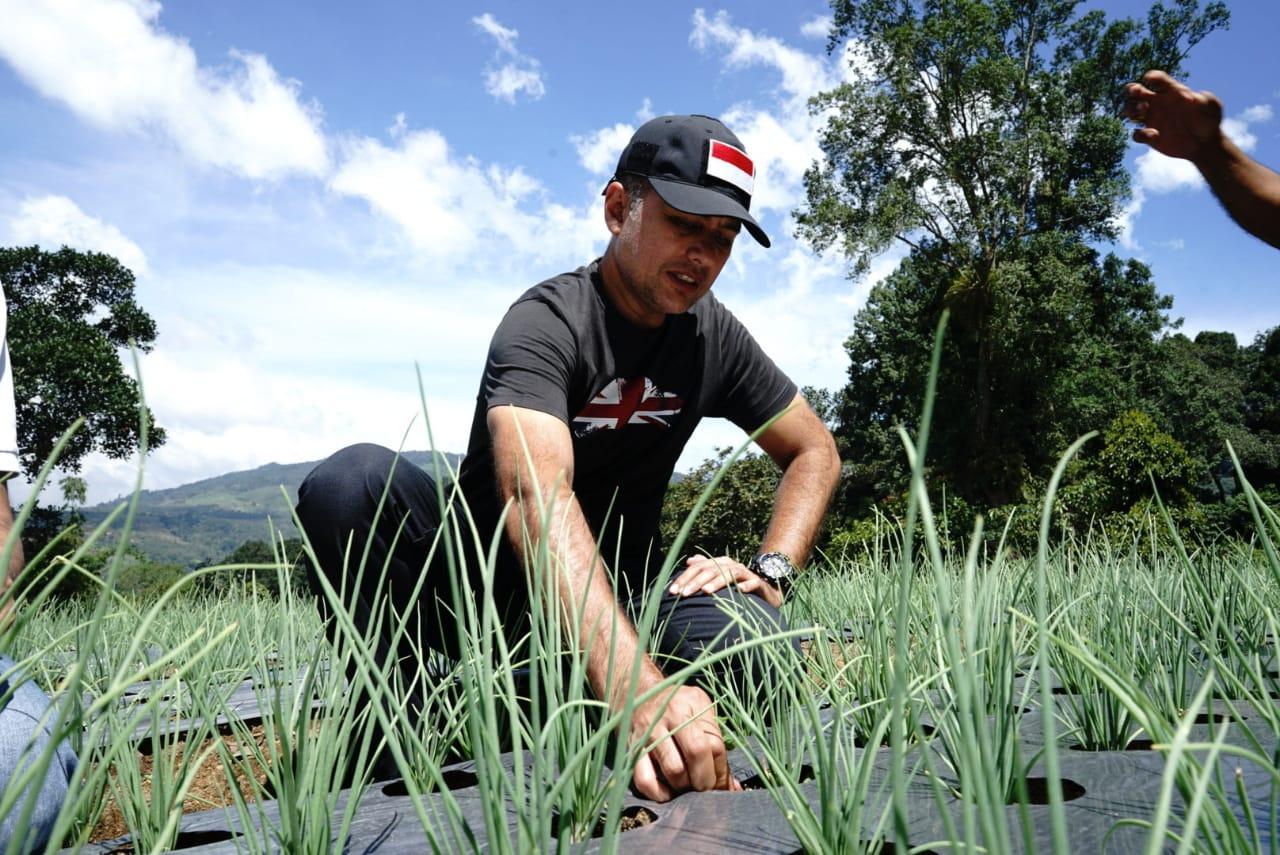Wakil Gubernur Sumut Musa Rajekshah meninjau lahan tanaman bawang merah di Desa Liang Pematang, Kecamatan Tigajuhar, Kabupaten Deliserdang. Foto: istimewa