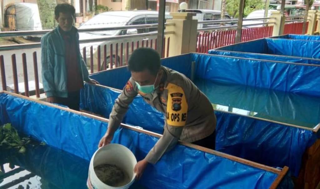 Kapolres Sibolga AKBP Triyadi saat menabur bibit lele di kolam yang didirikan Polres Sibolga. Foto: Istimewa