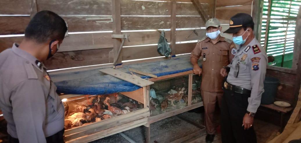Kasat Binmas Polres Tapteng, Iptu Rensa Sipahutar saat meninjau peternakan ayam di Desa Aek Garut, Kecamatan Tukka. Foto: Istimewa