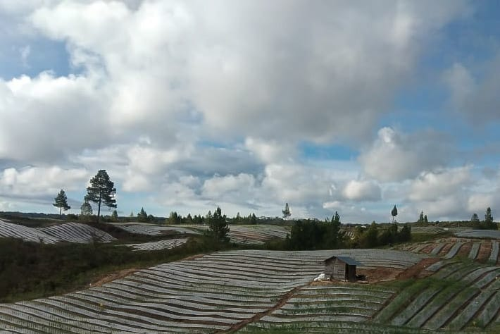 Lahan pertanian. Foto: Istimewa