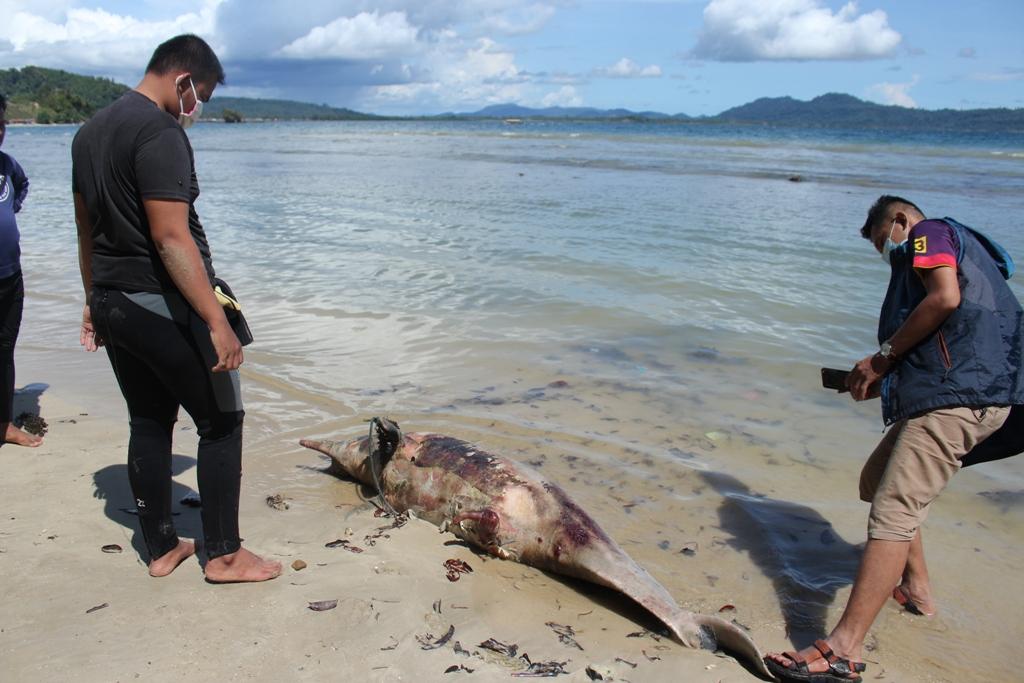 Lumba-lumba yang mati dan terdampar di tepian pantai di Kelurahan Hajoran Indah, Kabupaten Tapanuli Tengah, Sumatera Utara. Foto: Dok Komantab