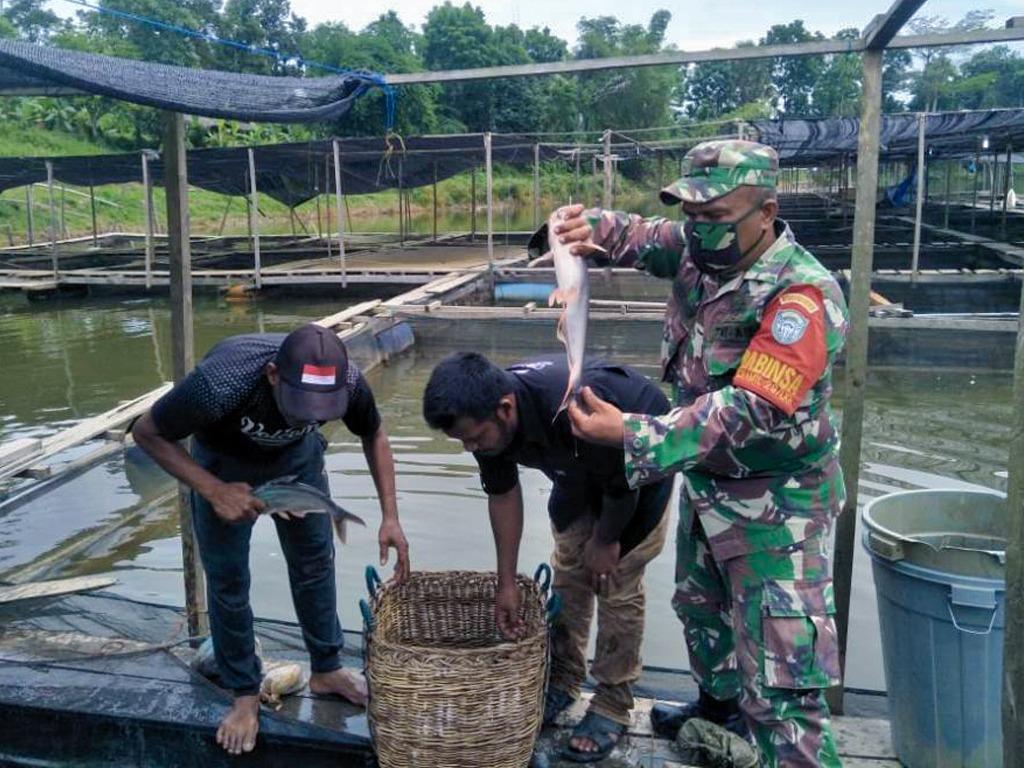 Babinsa Koramil Langkahan, Serda Samsudin saat ikut memanen ikan bersama warga. Foto: Istimewa